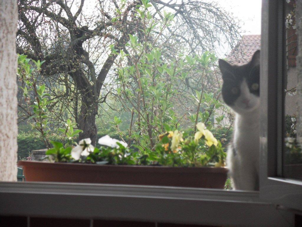 Notre féline au printemps dans les papooses SDC18906