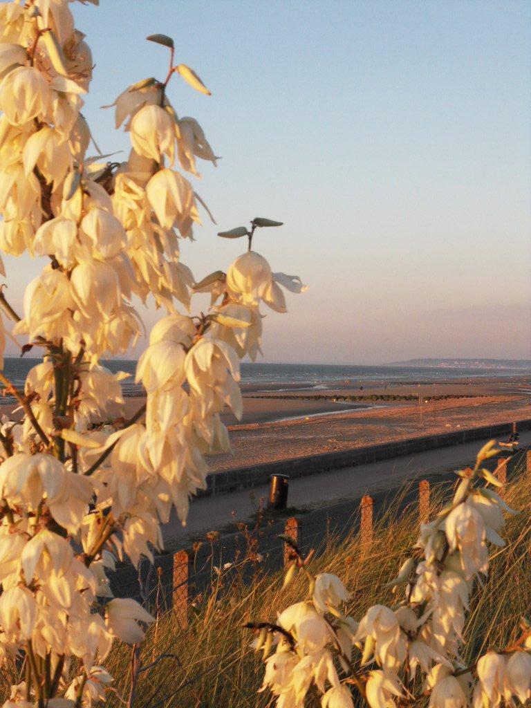 La photo de la semaine : fleurs de mer dans en promenade SDC10422