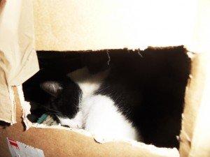 La photo de la semaine : sa maison est en carton, pirouette cacahouète ... dans Une vie de chat sdc10808-300x225